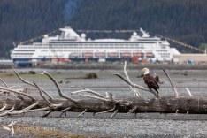 S&L Alaska - Seward_MG_5618